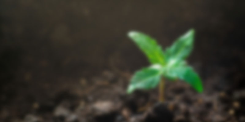 https://morcannabis.us/wp-content/uploads/2019/04/blog_4-800x400.jpg
